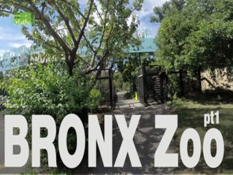 Bronx Zoo pt.1
