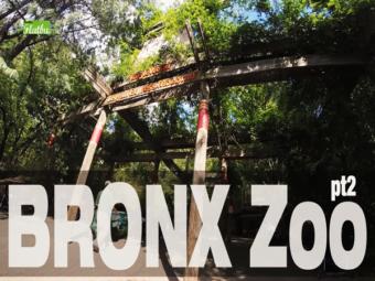 Bronx Zoo pt.2